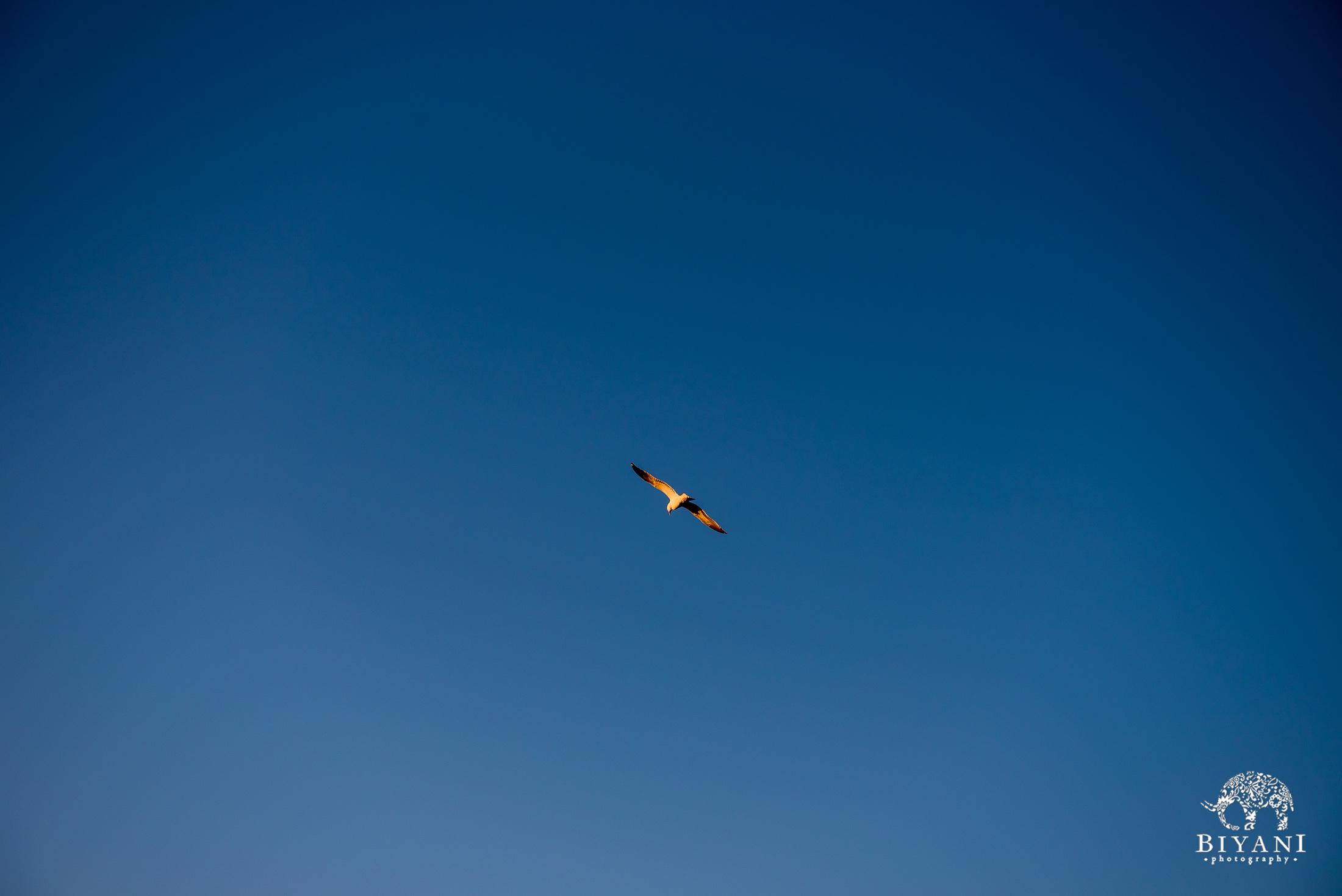 bird soaring through a clear blue sky